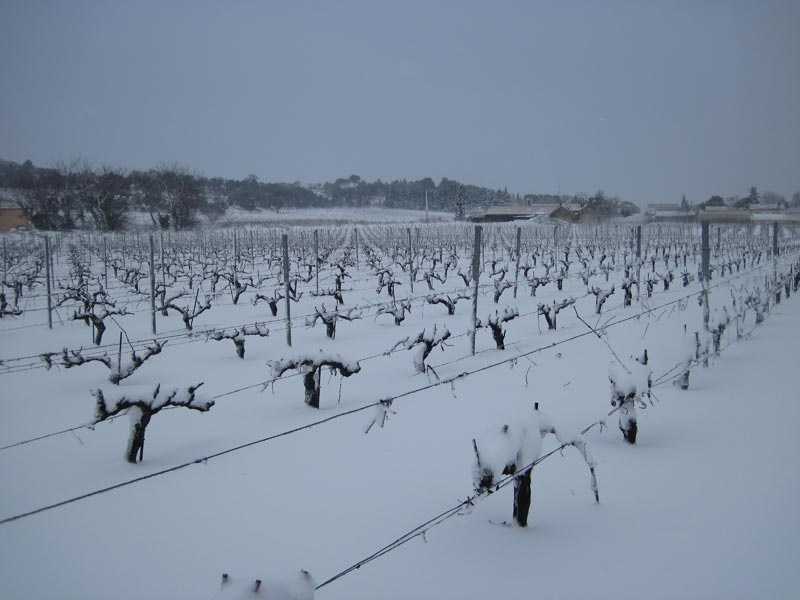 Our Vineyard under the snow